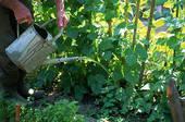 Полив огородных и садовых растений