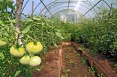 Работы в июле на томатных грядках