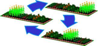 Севооборот. Четырехпольная система ведения огорода