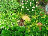 Три цветочные миниатюры для вашего сада