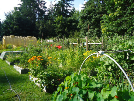 Разумная защита сада от вредителей