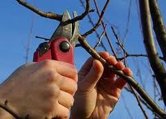 Весенняя обрезка плодовых деревьев и ягодных кустарников