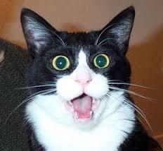 Запах кошачьей мочи: решение проблемы