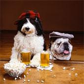Пивонерский задор.  Власти хотят запретить россиянам употреблять слабоалкогольные напитки