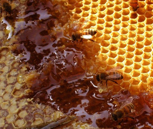 Медовые рецепты от всех болезней