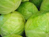 О пользе капусты белокачанной