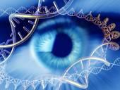 О чем шепчутся гены