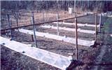 Весна! Открытие виноградных кустов
