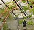 Под куполом стеклянным…