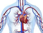 Причины, по которым может болеть сердце