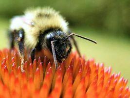 Мёд для лечения уха, горла, носа.